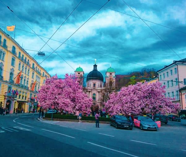 Fotografía en Salzburgo con árboles en flor